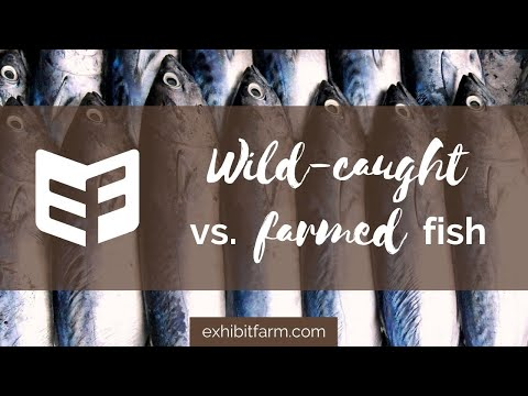 Wild-Caught vs. Farm-Raised Fish (Answering Consumers' Agriculture Questions)