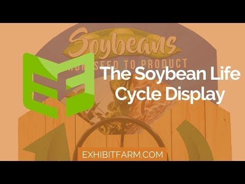 The Circle of Soy: The Soybean Life Cycle Display