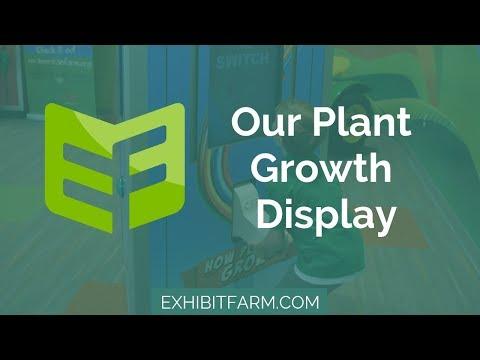 Seeds, Rain, and Sun: Our Plant Growth Display