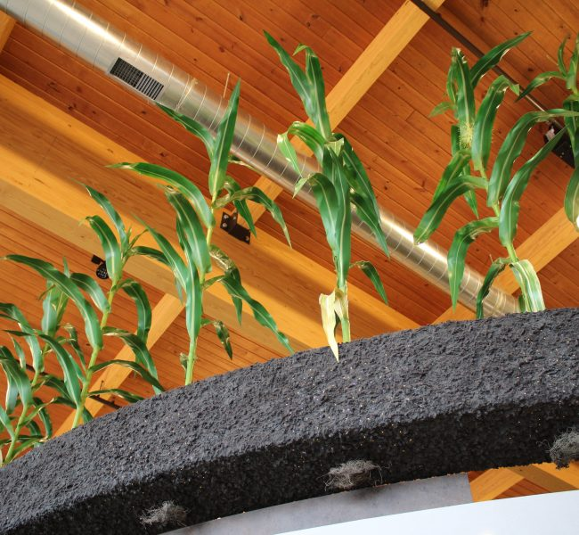 Sculpted Corn Stalks 08