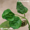 Artificial Calcium Deficient Soybeans