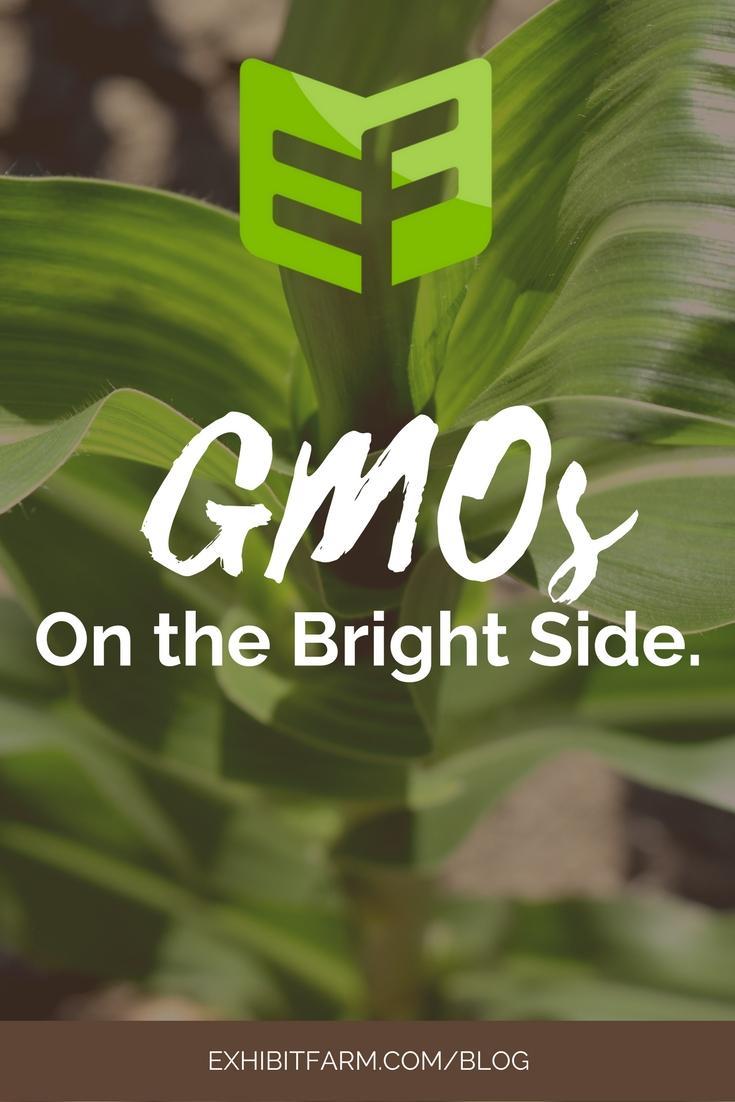 GMO Display Content 02 Promo