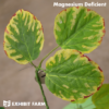 Artificial Magnesium Deficient Soybeans