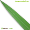 Artificial Manganese Deficient Corn Leaf