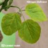 Artificial Nitrogen Deficient Soybeans