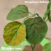 Artificial Phosphorus Deficient Soybeans (part of soybean nutrient deficiency model)