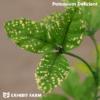 Artificial Potassium Deficient Alfalfa
