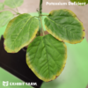 Artificial Potassium Deficient Soybeans