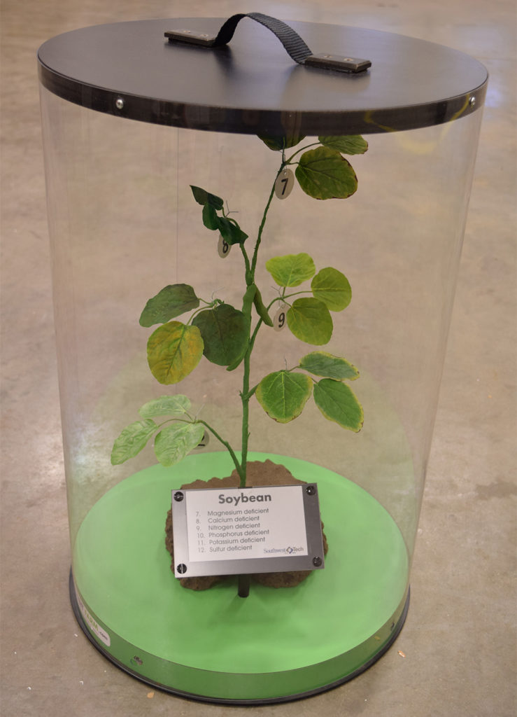 Soybean in Case (Macronutrient Deficiencies)