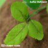 Artificial Sulfur Deficient Alfalfa