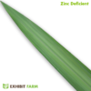 Artificial Zinc Deficient Corn Leaf