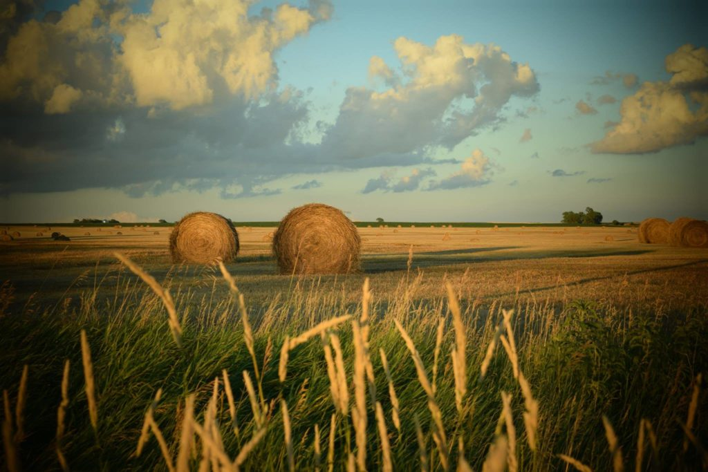 South Dakota Haybales