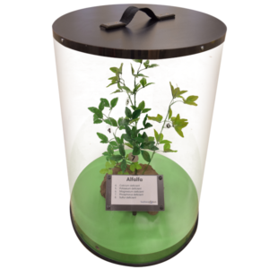 Artificial Alfalfa Plant in Display Case (one of the alfalfa nutrient deficiency models)