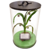 Artificial Corn Plant in Display Case