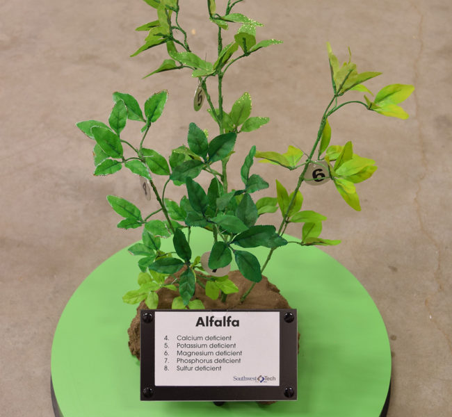 Alfalfa Plant Model (Macronutrient Deficiencies)