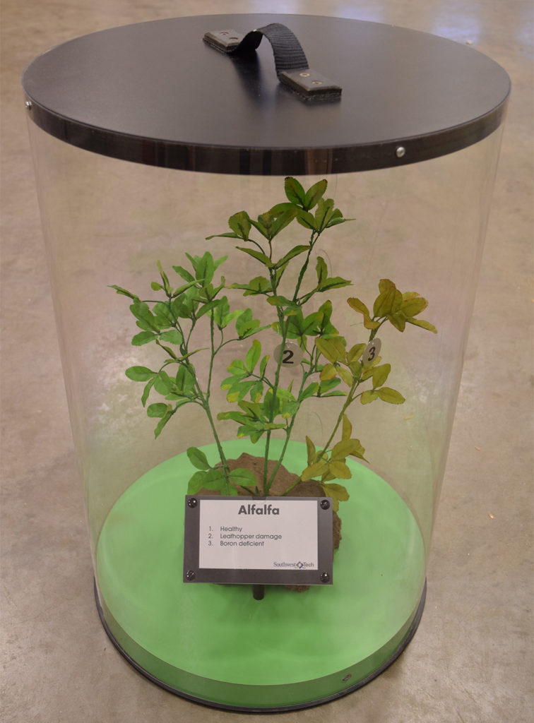 Alfalfa in Case (Micronutrient Deficiencies)