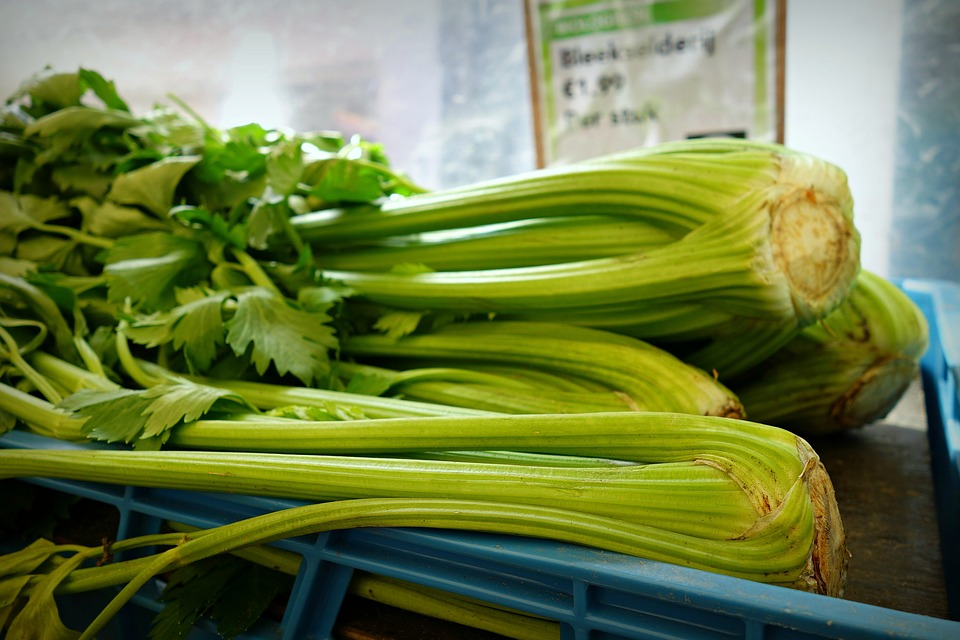 Vegetable Celery Shrub Celery Fresh