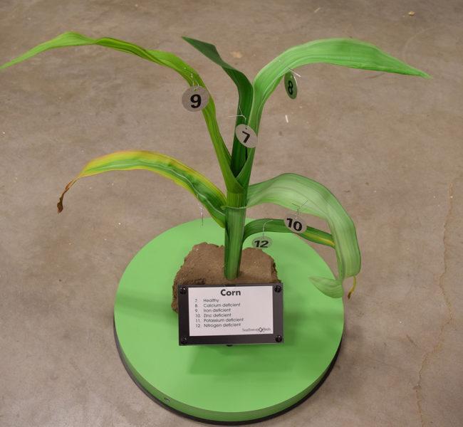 Corn Plant Model (Plant 02)