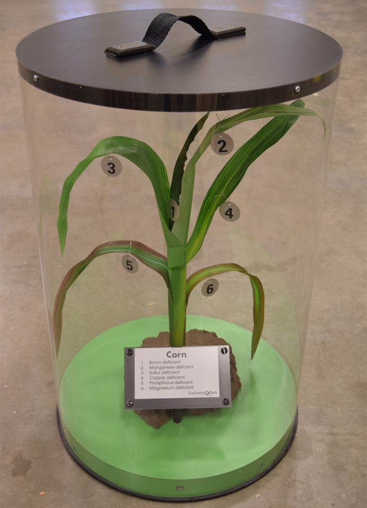 Corn in Case (Plant 01)