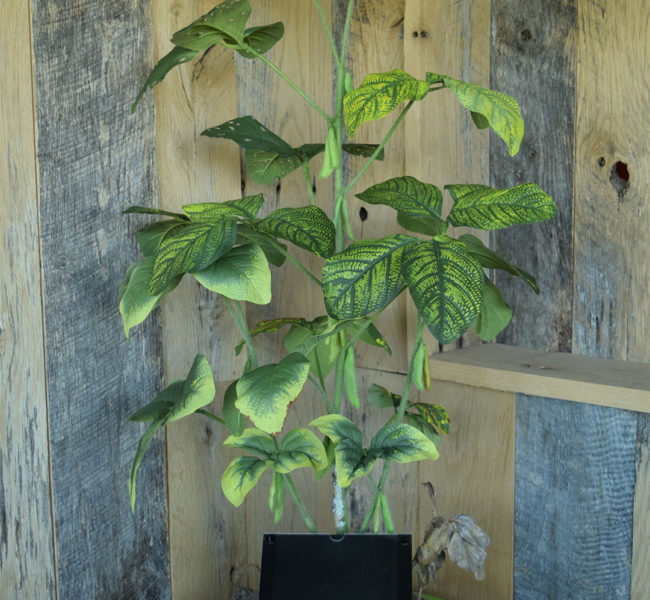 Diseased Soybean Plant Model