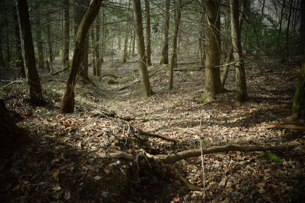 Photo of a Forest in Springtime