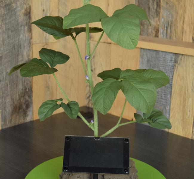 R1 Soybean Plant Model