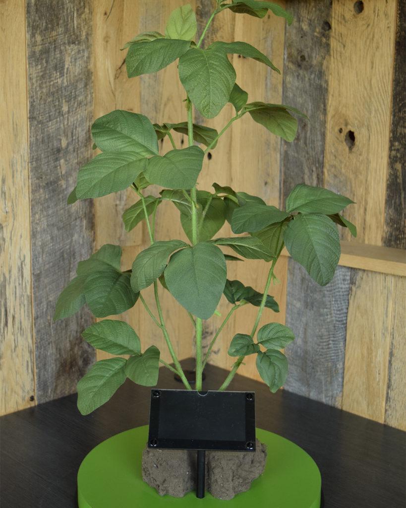 R3 Soybean Plant Model