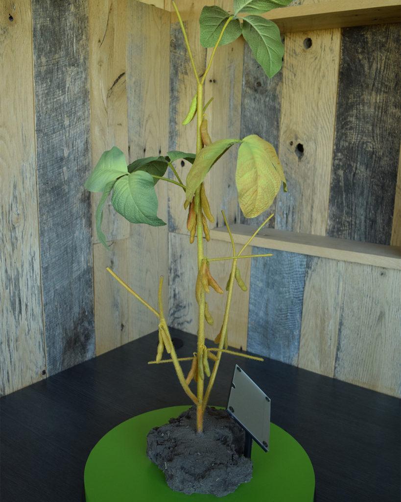 R7 Soybean Plant Model