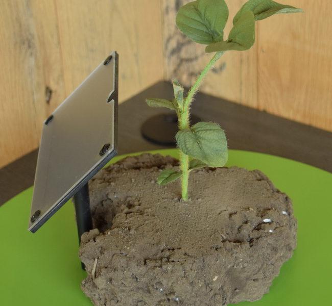V1 Soybean Plant Model