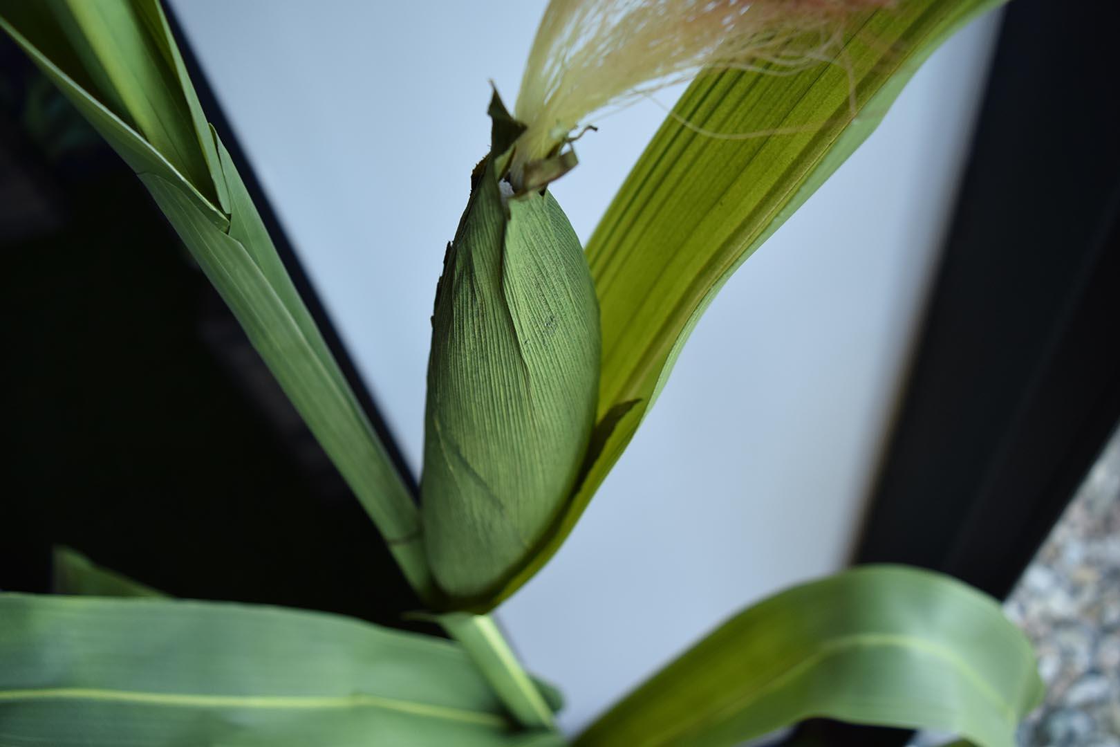 Lifelike Corn Plant Model