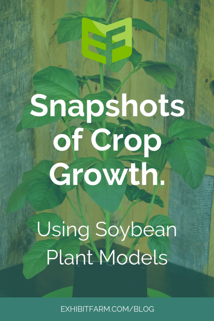 Soybean Models Promo
