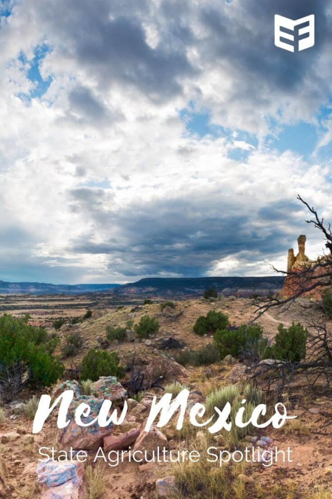 Promo image for New Mexico ag spotlight, showing an open range and scattered clouds