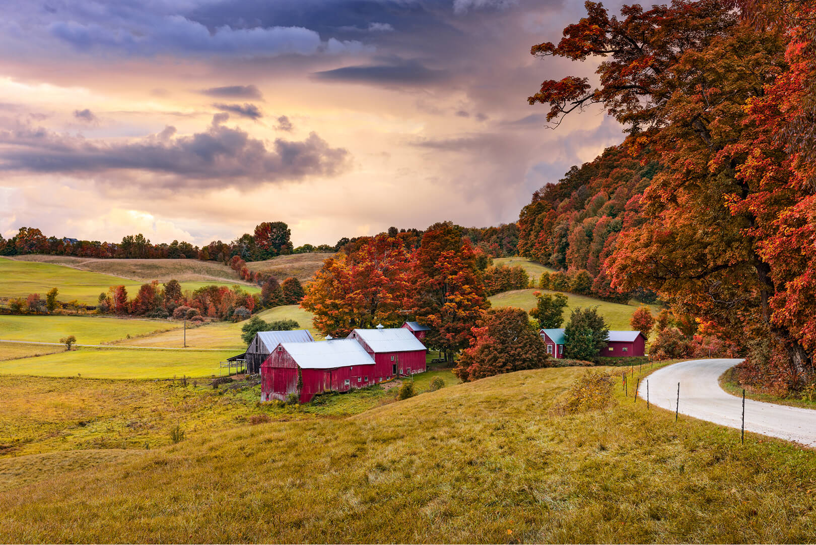 Vermont farm with red barns on hilly landscape, with rusty orange trees and purple clouds in the background