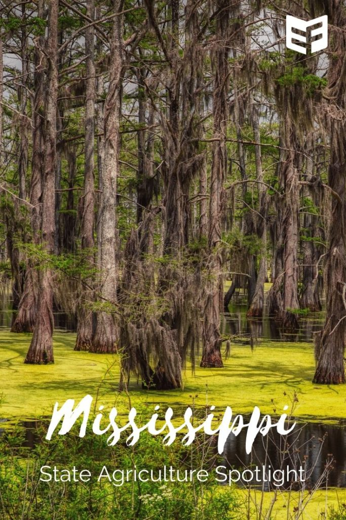 "Photo showing trees growing in a swamp; text reads ""Mississippi State Agriculture Spotlight"""