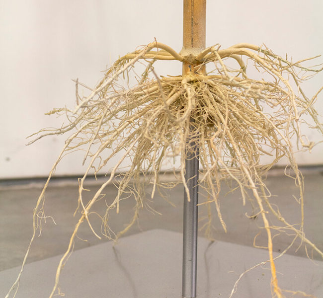 Detail of the base of the lifelike artificial corn plant, highlighting the exposed root system