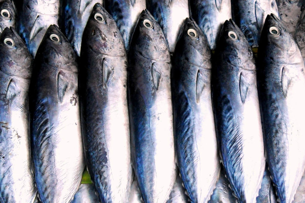 Photo of fish lying in a row; used for article on wild-caught vs. farmed fish