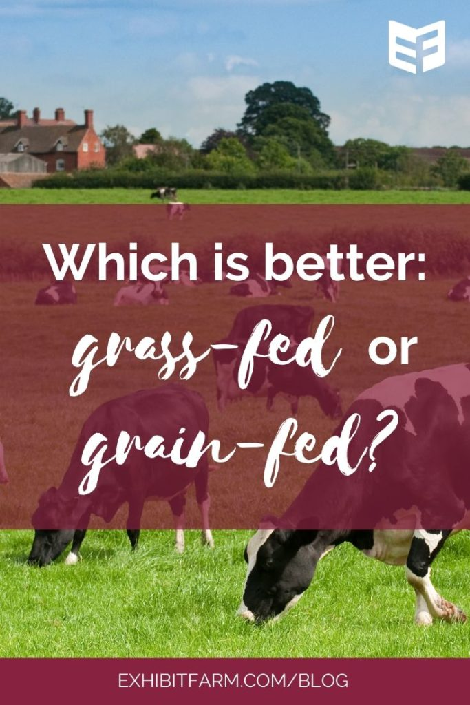 "Image shows cows grazing; text reads ""Which is better: grass-fed or grain-fed?"""