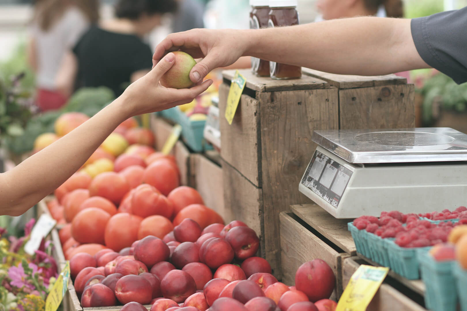 Seller handing apple to buyer at farmer's market; used for article on local food