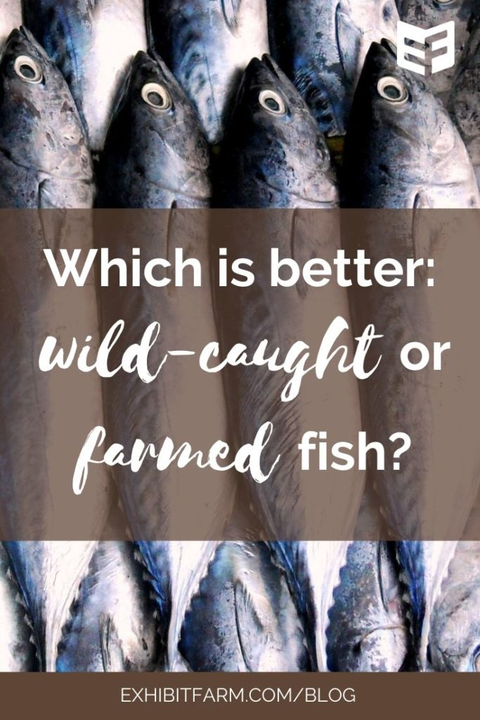 "Brown graphic; text reads ""Which is better: wild-caught or farmed fish?"""