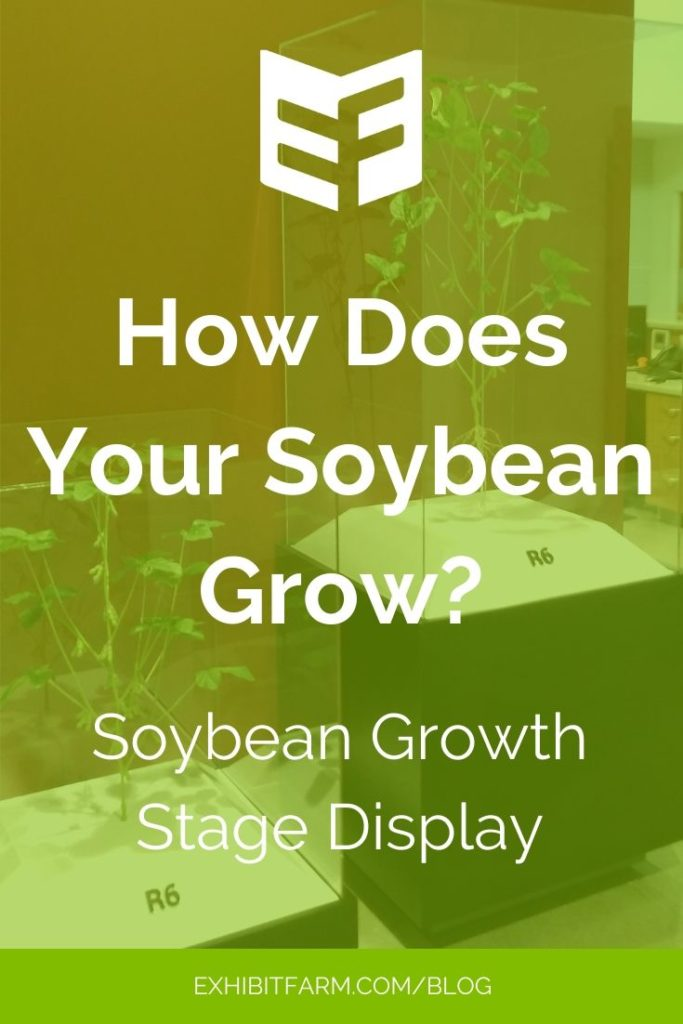 "Green graphic; text reads ""How Does Your Soybean Grow? Soybean Growth  Stage Display"""