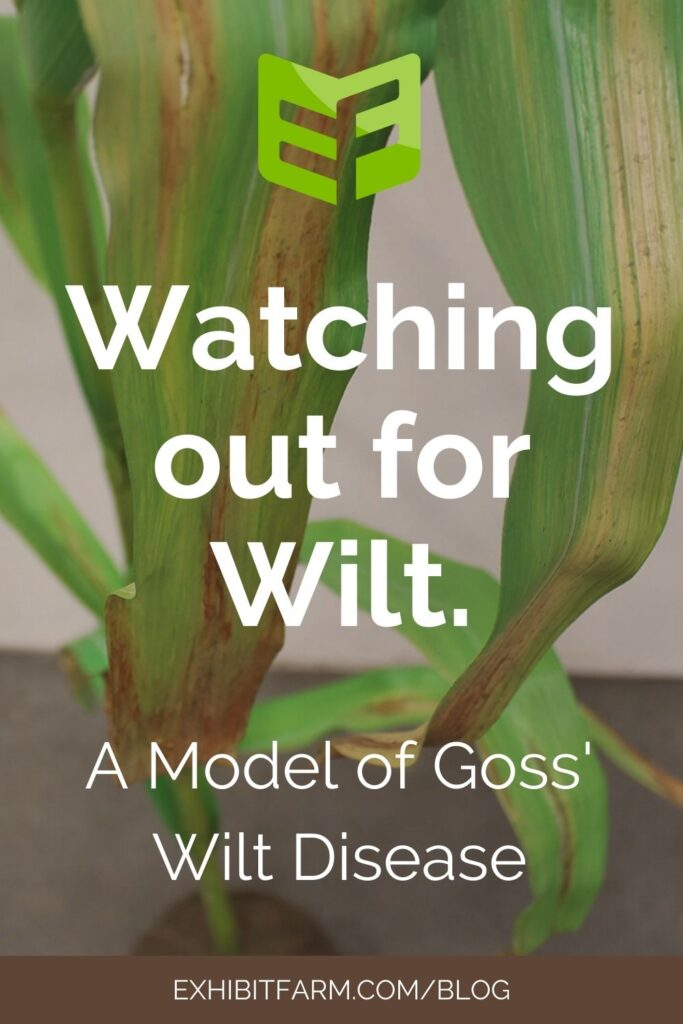 "Brown graphic; text reads ""Watching out for Wilt. A Model of Goss' Wilt Disease"""
