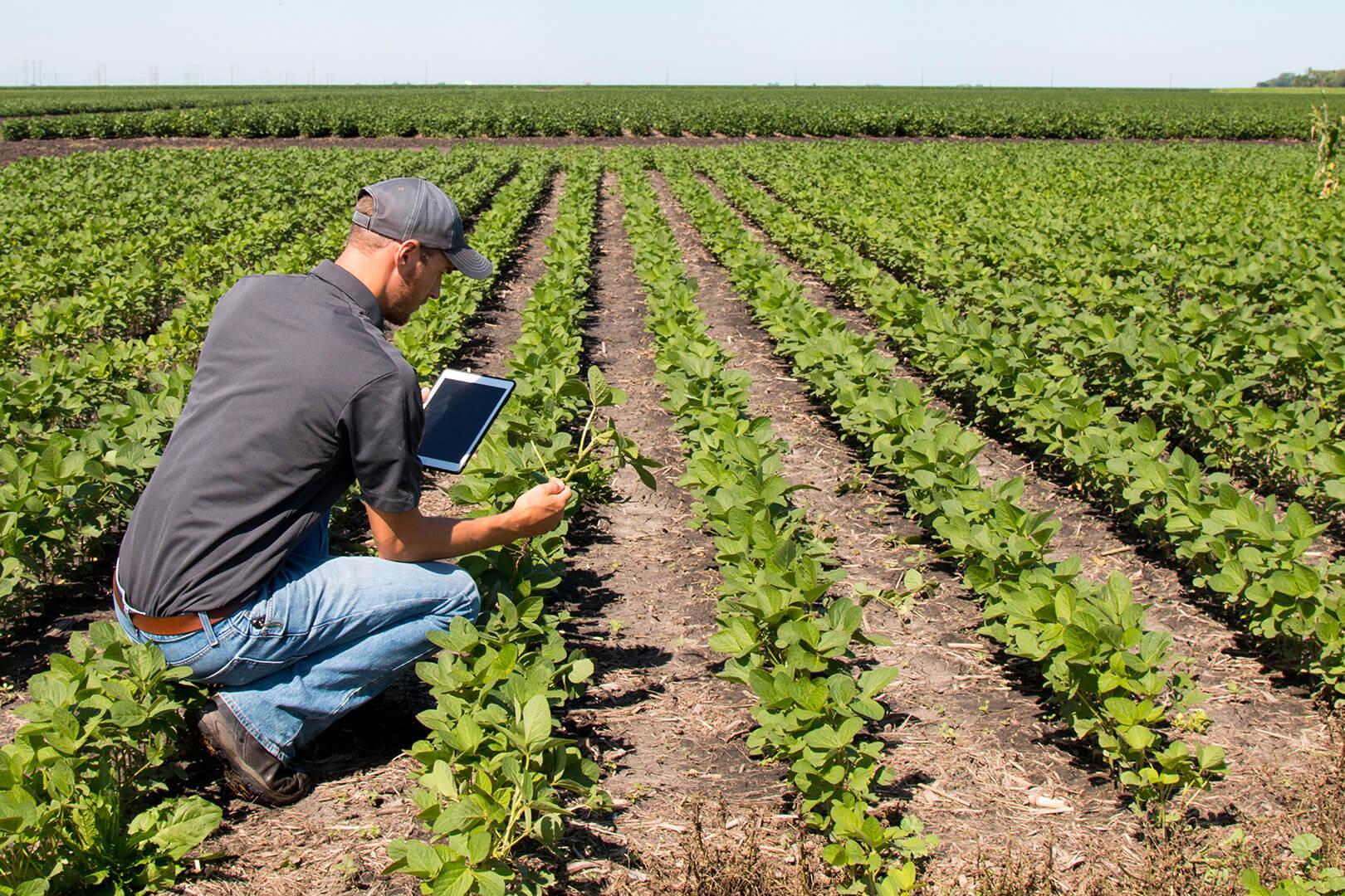 Farmer with tablet kneeling in field to inspect crop