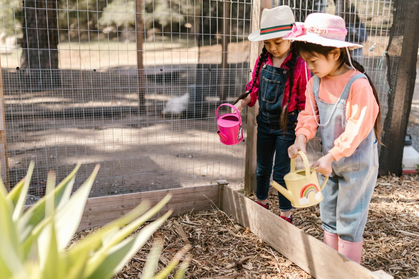 Two little girls with watering cans standing beside raised garden bed