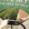 Hand turning the wheel to show the transition from hemp seedlings to fully-grown industrial hemp plants